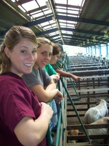 At the livestock auction, Veterinary Abroad Educational Program