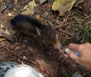 Wildlife Rescue Center Costa Rica